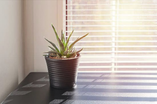 Plantation Shutters and Blinds in Phoenix, Arizona